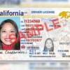 Nha Lộ Vận California bắt đầu nhận làm 'REAL ID'